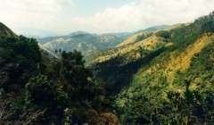 jamaica-see-and-do-blue-mountains_001p