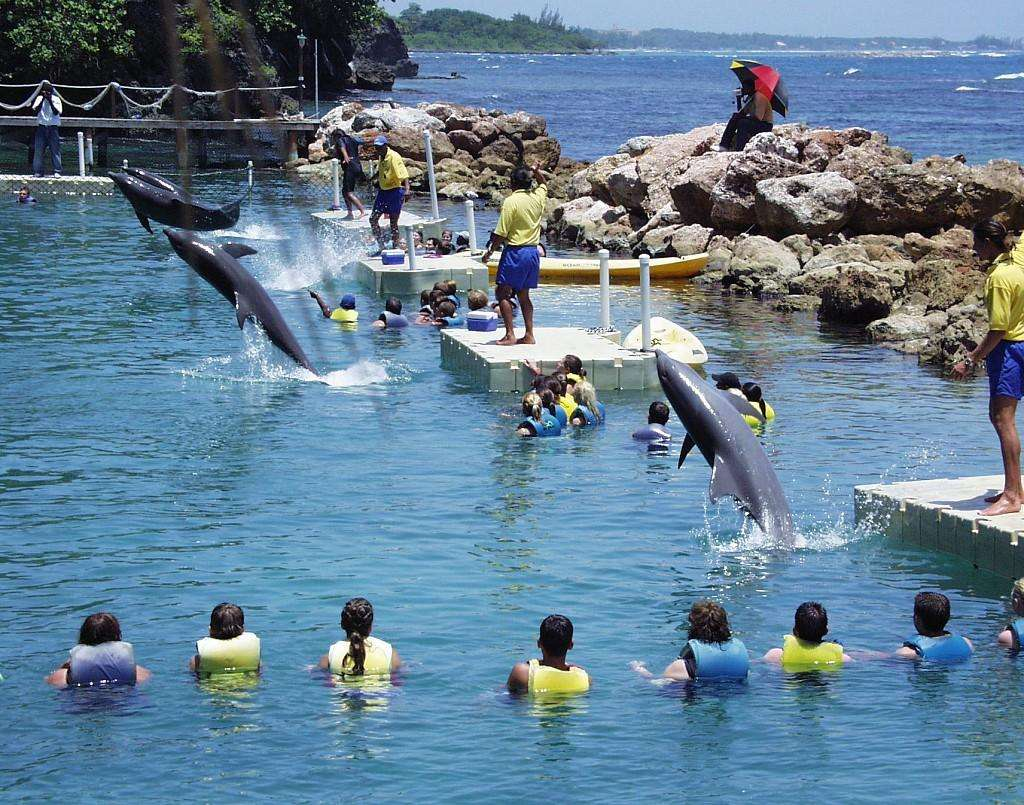 Places To Swim With Dolphins In Miami Beach