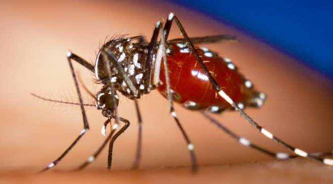 Health Ministry confirms more cases of locally transmitted Chikungunya!!