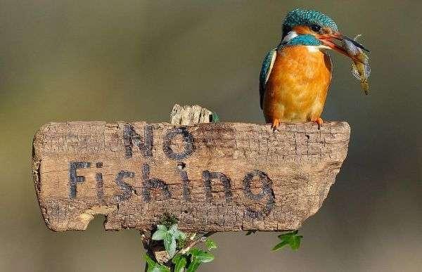 4 New Fish Sanctuaries to be Established