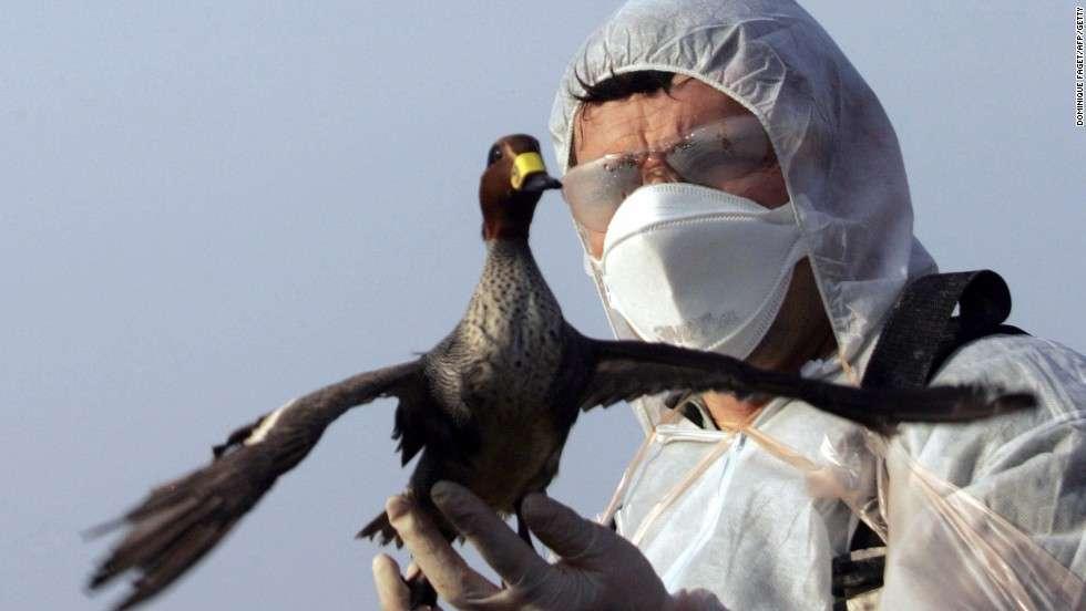 Bird Flu Worries