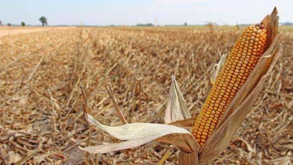 Drought Crippling Agriculture
