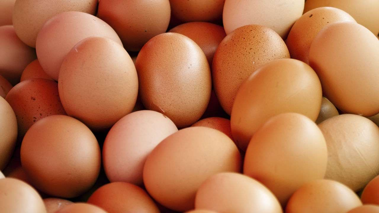 Egg Farmers Continue Lobby Against GCT Imposition
