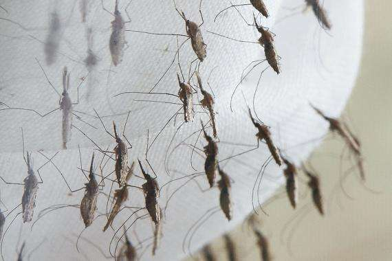 Health Ministry Warns Against Mosquito-born Viruses
