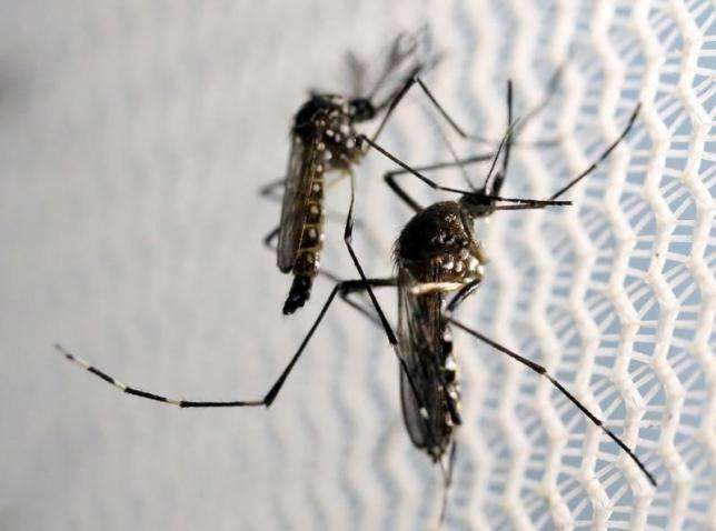 World Bank Gives US$150m to Caribbean Zika Fight