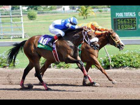 Caribbean Choice Top Billing for Jamaica Oaks