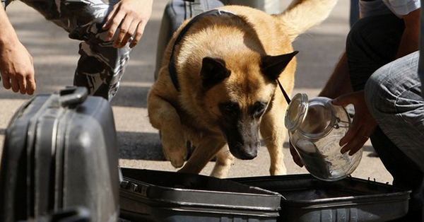 Opposition Welcomes Cuban Sniffer Dogs