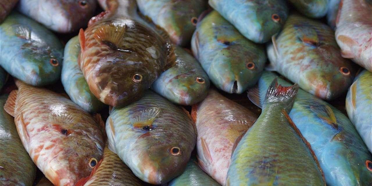 Are Corrupt Politicians Depleting Jamaica's Fish Stock?