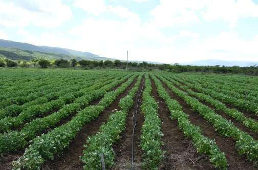 Rising Temperatures Devastating The Farming Sector, Jamaica Agricultural Society Says