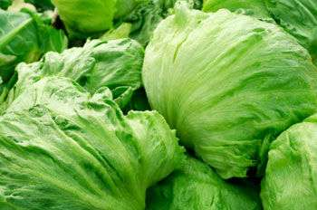 Jamaicans Reassured of Safety of Local Lettuce Amid US Report of E.Coli Outbreak