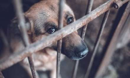 Animal Rights Activists Start Online Petition For Amendments to Laws Against Animal Cruelty