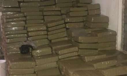 Manchester: Police Make Largest Compressed Ganja Seizure In Jamaica's History Worth $35M