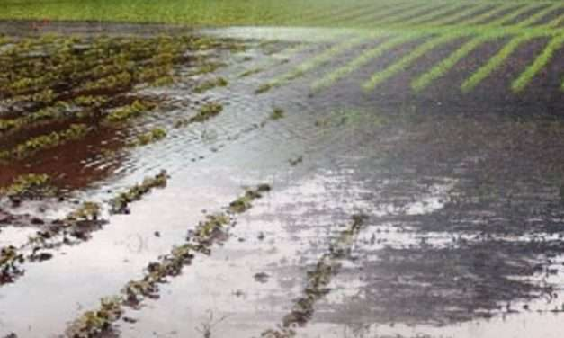 From One Extreme to The Next – Drought Affected Farmers Facing Losses Due to Heavy Rains