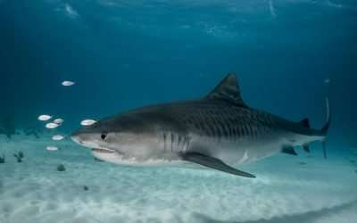 Fishermen Recount Moments Human Remains Were Found in the Belly of a Shark