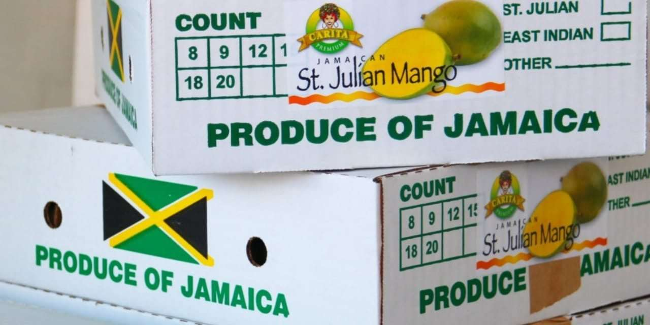 Jamaica Resumes Mango Exports to UK After 7-Year Delay