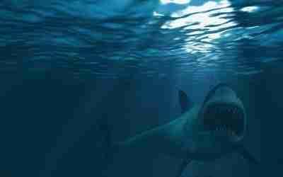 Westmoreland Fisherman Succumbs to Shark Attack Injuries