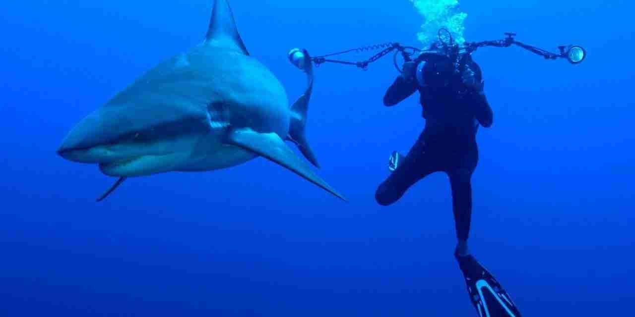 12 Shark Fatalities in Jamacia Since 1827